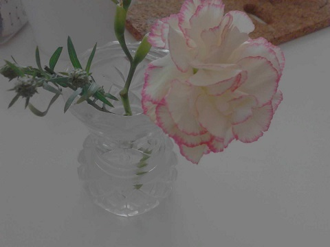 12月10日の花.jpg