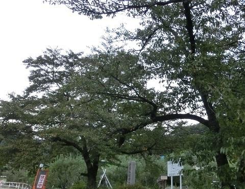 長野の木々2019秋