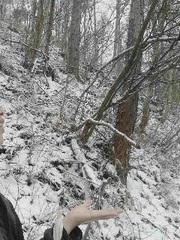 イブの雪.jpg