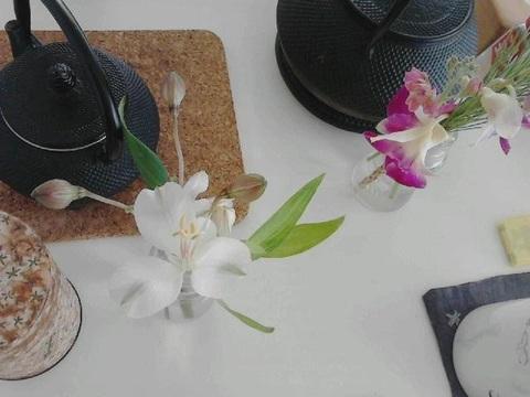 小正月の花.jpg
