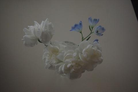 白と青の花.jpg