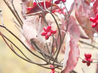 赤い実と紅葉.jpg