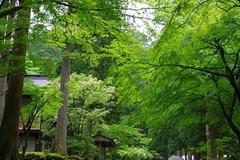 IMG3369永平寺境内240.jpg
