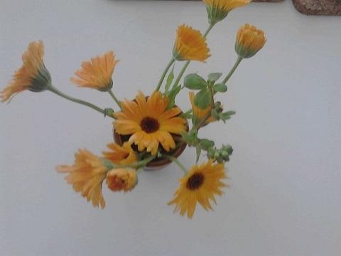 カレンデュラの花瓶